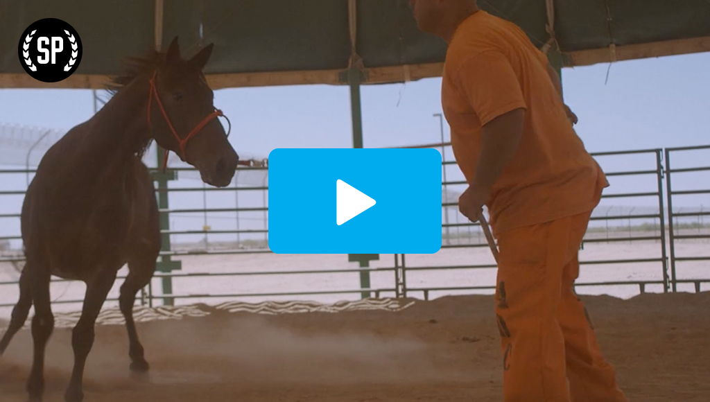 A man in his orange prison uniform stands in front of a wild horse kicking up dust.